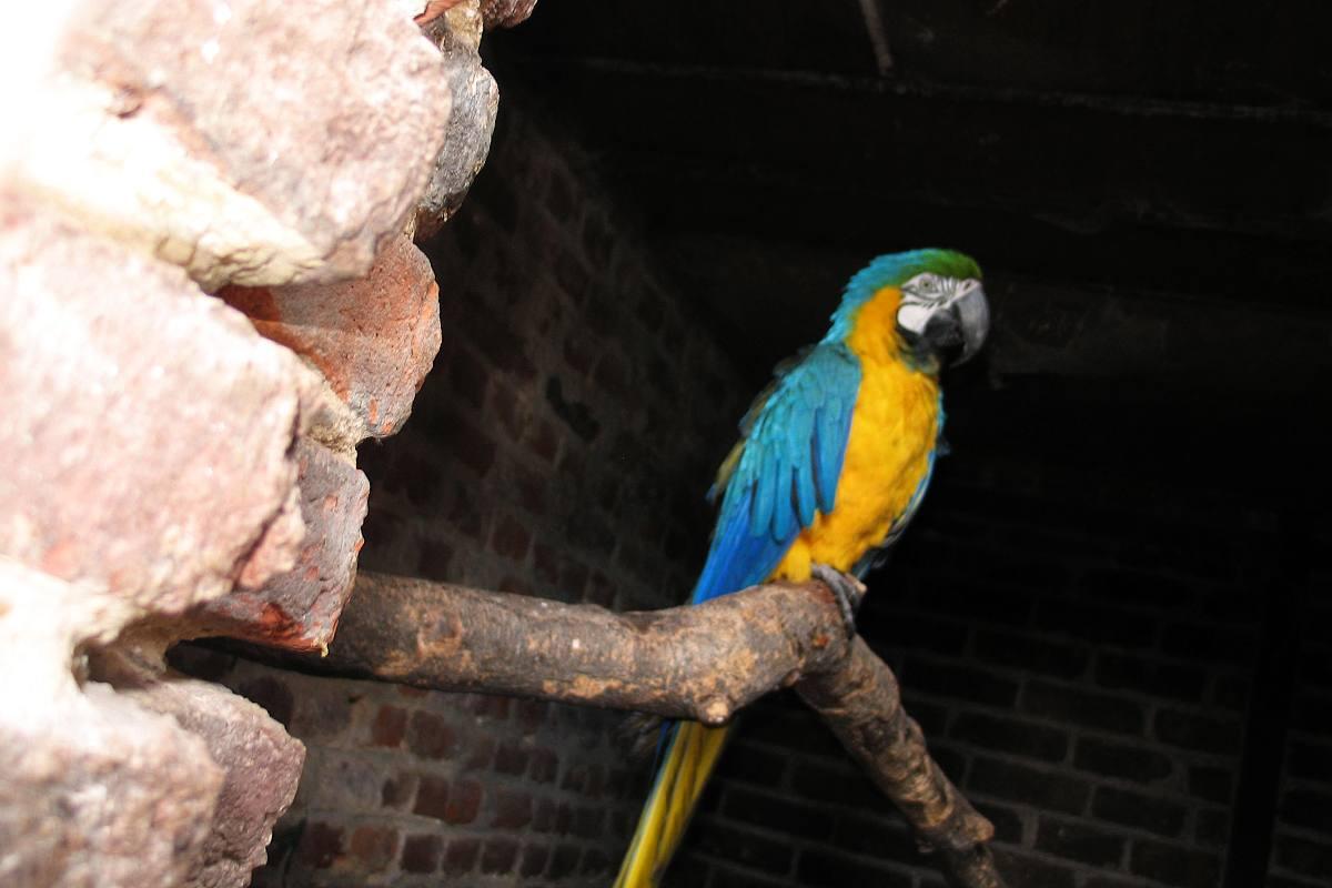 V zooparku v Estourmelu se občas proletí i tento papoušek ara
