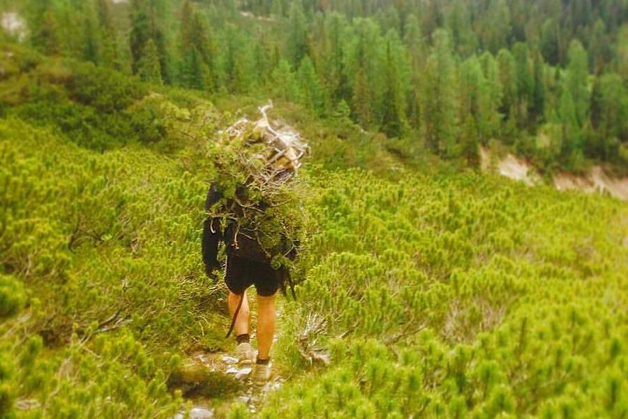 Bonsajisté se někdy vydávají pro své úlovky vysoko do hor