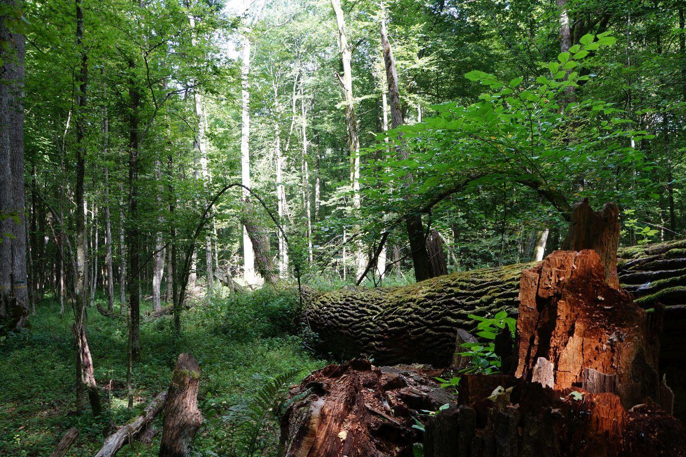 Karel Hron zakoupil kus lesa u Černé za Bory (ilustrační foto)