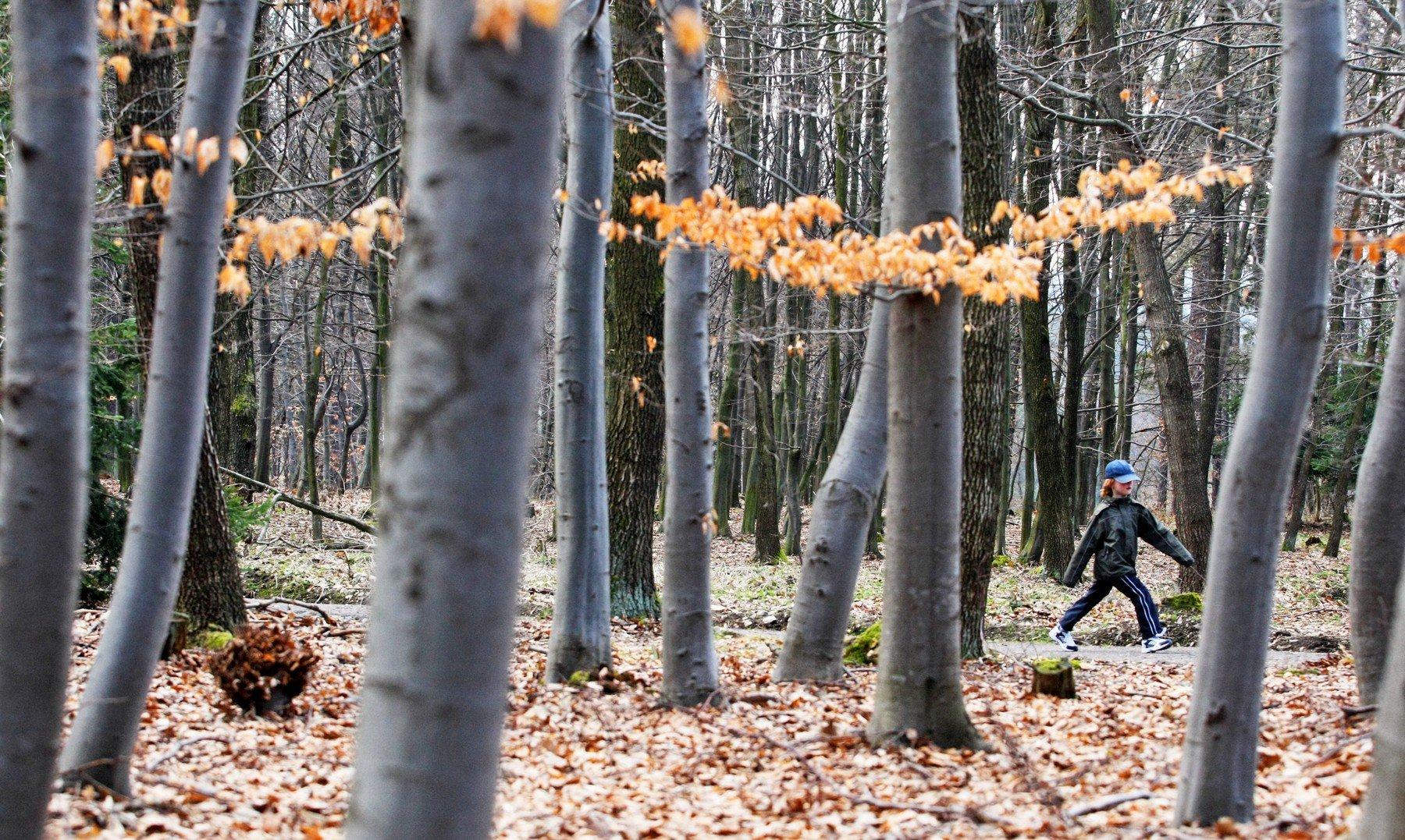 Městské lesy Chrudim