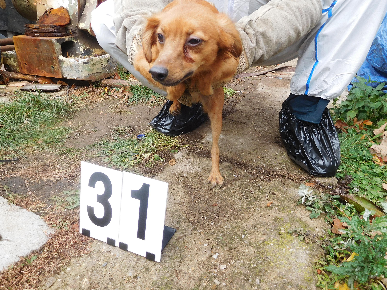 Jeden z téměř 80 psů odebraných chovatelce v Mladějově na Svitavsku