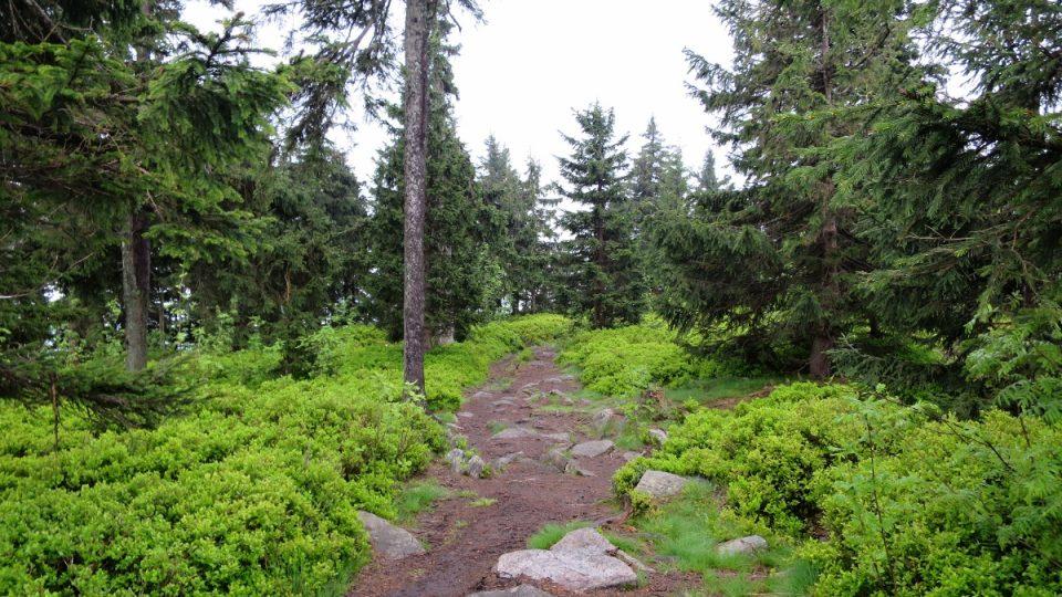 Cesta k vrcholu Klepáče