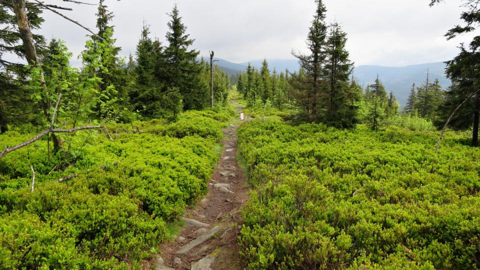 Cesta z Klepáče k vrcholu Králický Sněžník