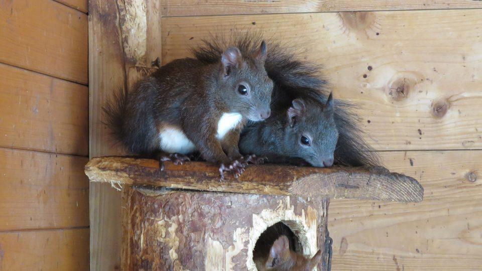 Děti v Pasíčkách rády pozorují veverky