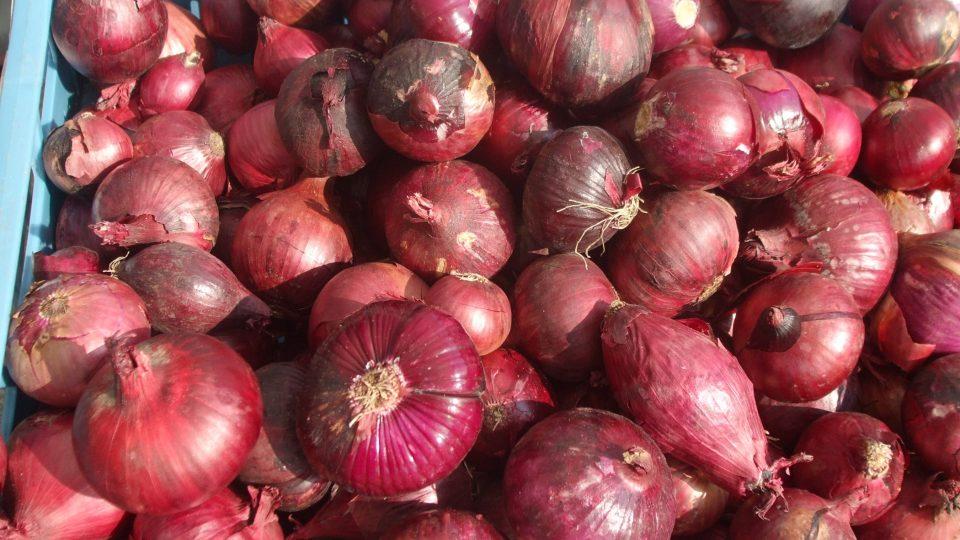 V antice cibule patřila vedle česneku k nejoblíbenějším druhům zeleniny