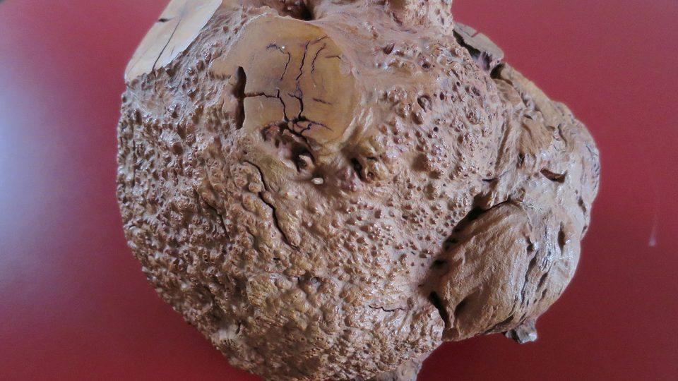 Kořen vřesovce stromovitého, ze kterého se vyrábějí dýmky