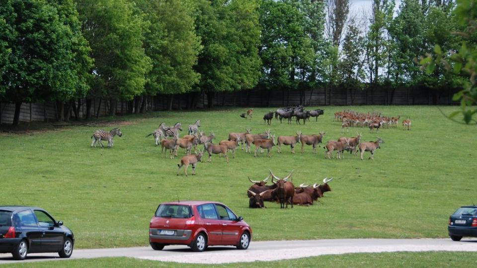 Safari v ZOO Dvůr Králové nad Labem