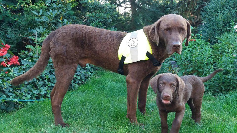 Sam a Vichr - psi Kláry Hlubocké, které cvičí na vyhledávání otrávených návnad