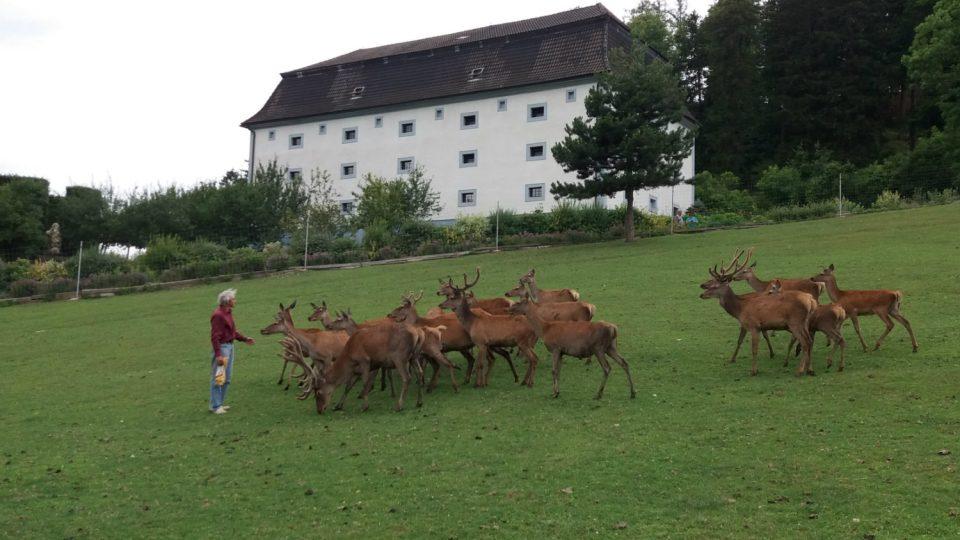 Majitel zámku Nové Hrady Petr Kučera na zámecké farmě jelení a dančí zvěře