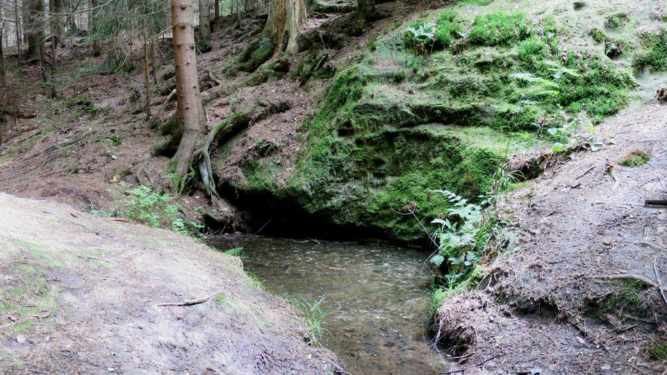 Javornický pramen řeky Svitavy