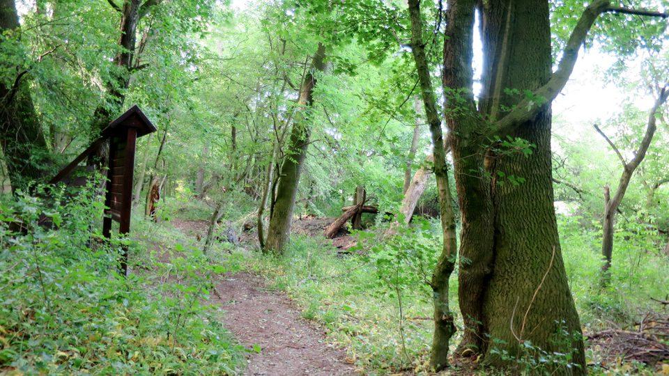 Nemošická stráň - divoká příroda kousek od Pardubic