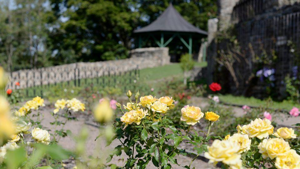 Růže jsou dominantou okrasné části zahrady