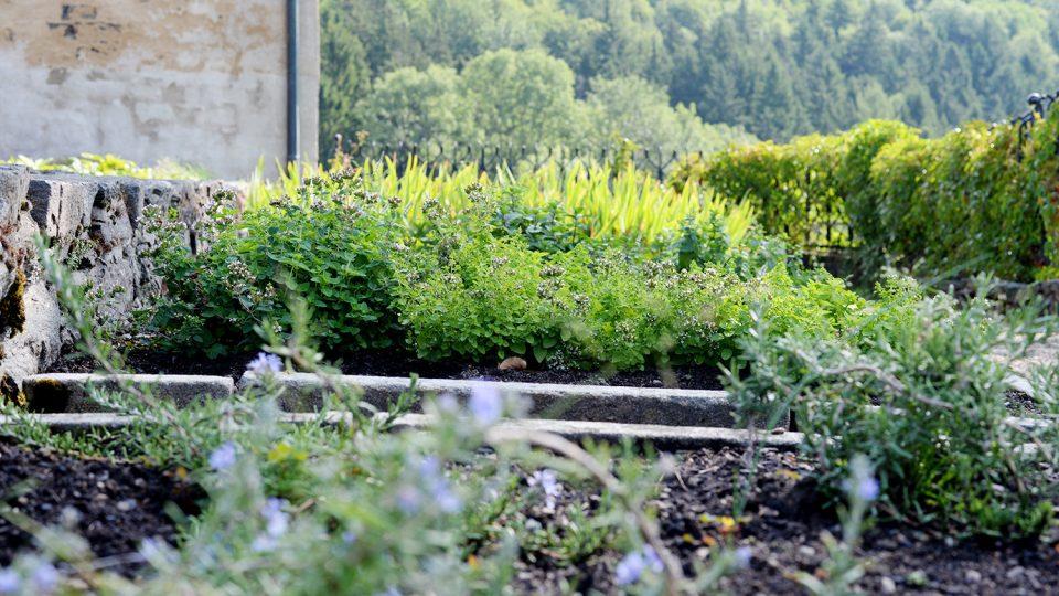 V bylinkové části zahrady najdete mátu, meduňku nebo rozrazil