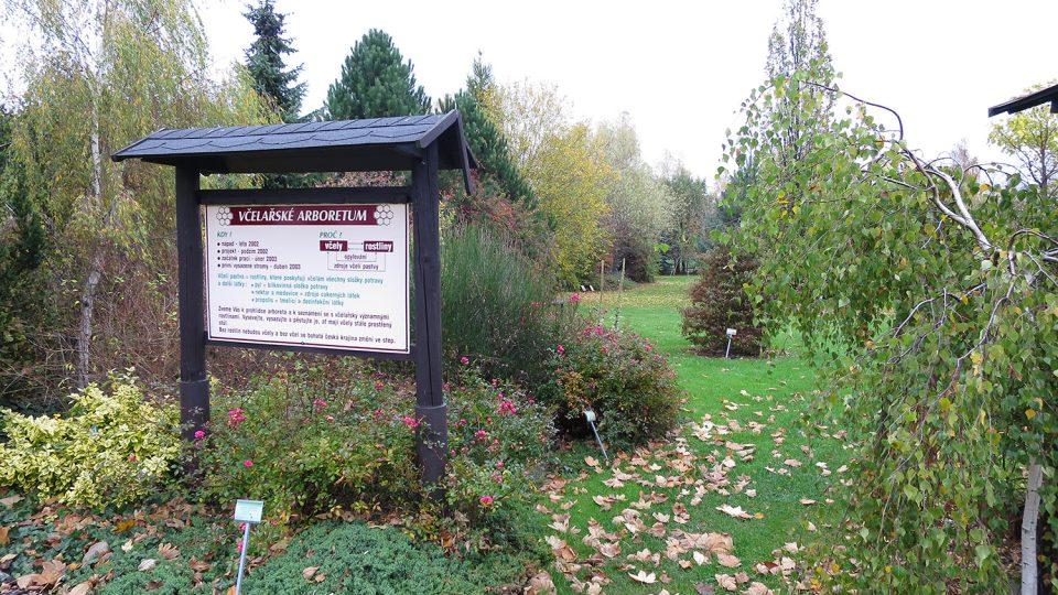 Včelařské arboretum škola buduje od roku 2003