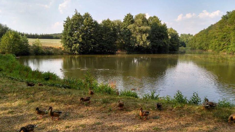 Rybník Švihov už dnes není na koupání, ale procházka po hrázi s kachním doprovodem, to je stále výletové lákadlo