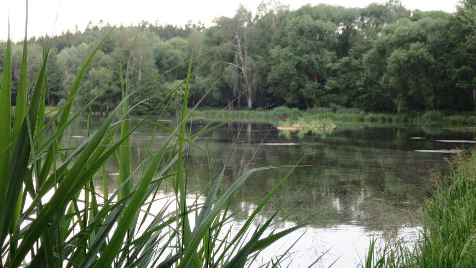 V Rosničce jsou řasy, ty ale napomáhají okysličování vody
