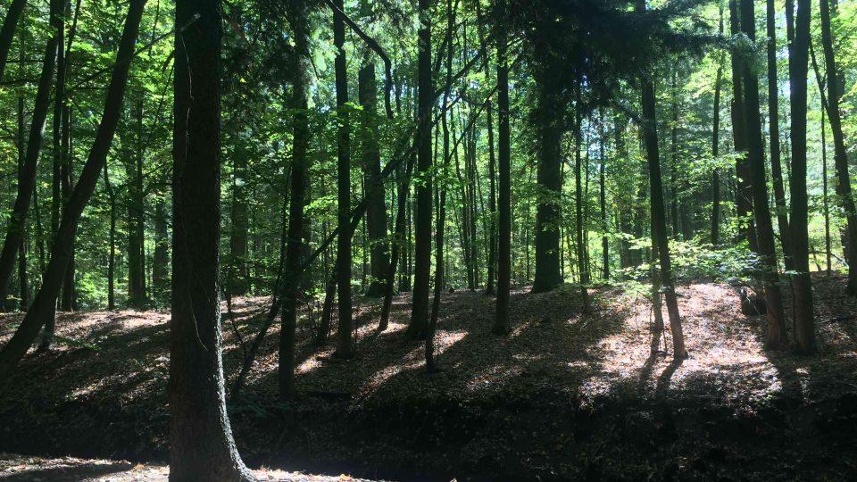 Lesy na Přeloučsku vypadají podobně, jako před 500 lety