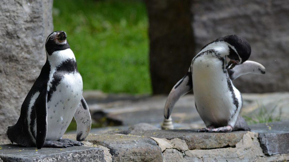 U Pavilonu tučňáků
