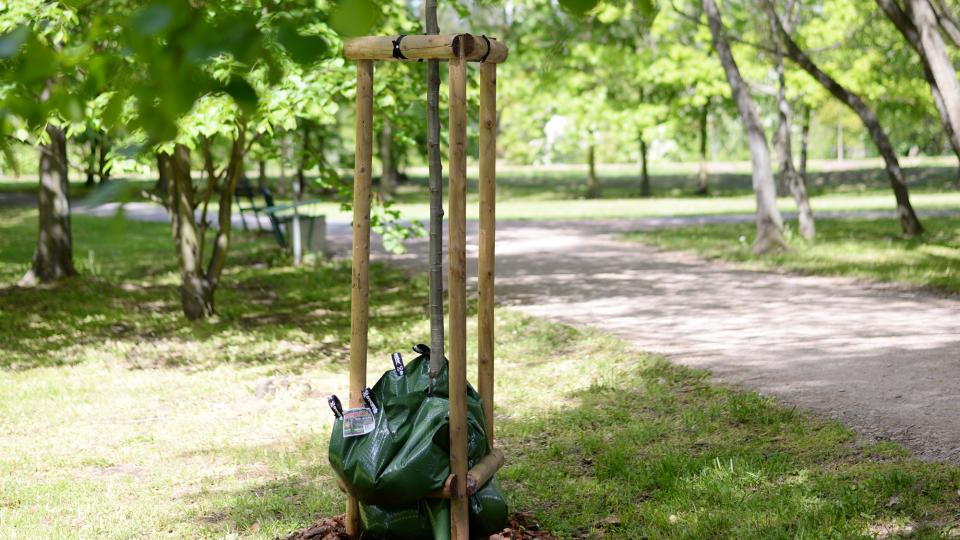 Vodní vaky zahradníci použivají třeba v pardubickém parku Na Špici