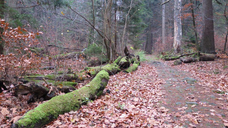 V přírodní rezervaci Polom se musíte držet jen hlavní cesty, zeleně značené stezky