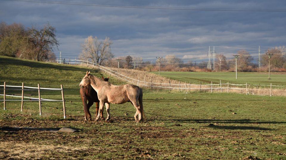 Koně na pastvě u Úhřetic