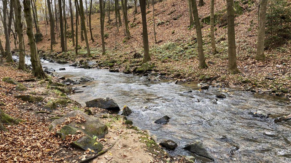 Do přírody v okolí Vrbatova Kostelce se dá vyrazit podél toku řeky Žejbro