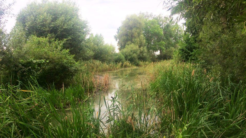 Brozanské Labiště, slepé rameno řeky Labe, kde se daří ptákům, obojživelníkům i broukům