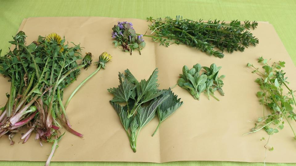 Bylinky připravené do jarního očistného čaje