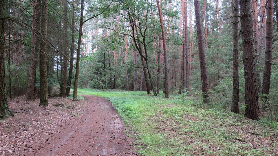 Procházka k postelím není náročná a vede krásným smíšeným lesem