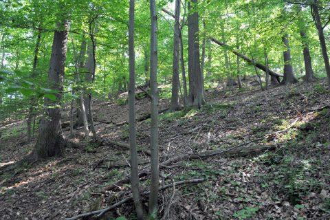 Lesy na Křivoklátsku jsou v letním období opravdu husté