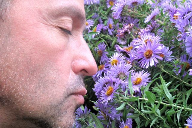 Poradna pro pacienty se ztrátou čichu pardubické nemocnice má tisícovku klientů  (ilustrační foto) | foto: Jan Pokorný,  Český rozhlas