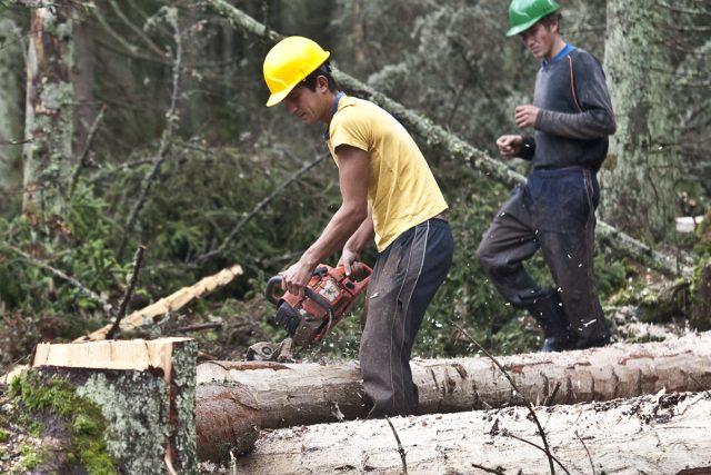 Dřevorubec v Národním parku Šumava