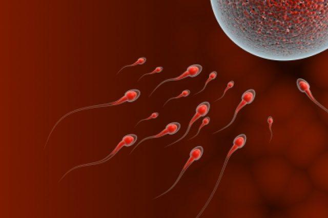 Oplodnění lidského vajíčka