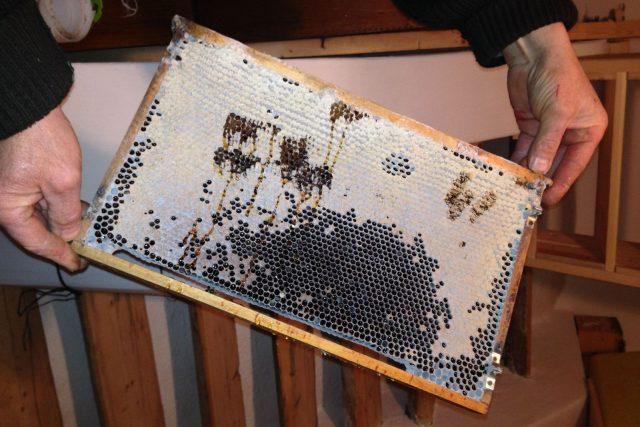 Tzv. cementový med je spolu s cukrem hlavní potravou pro včely v zimním období