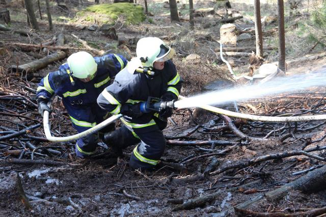 Požár lesního porostu v Hamrech