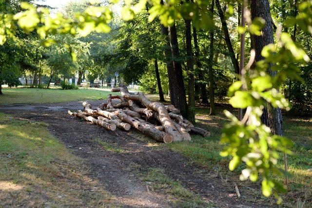 Kácení v lesoparku na Dukle už začalo