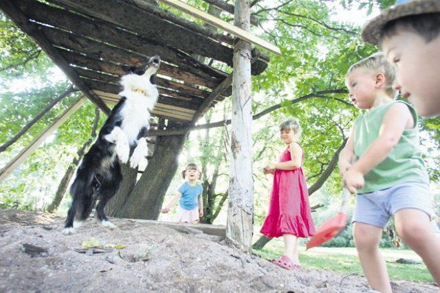 Děti v lesní školce