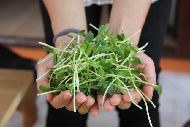 Klíčky a semínka jsou jednou z tělu prospěšných superpotravin | foto: CC0 Public domain,  Fotobanka Pixabay