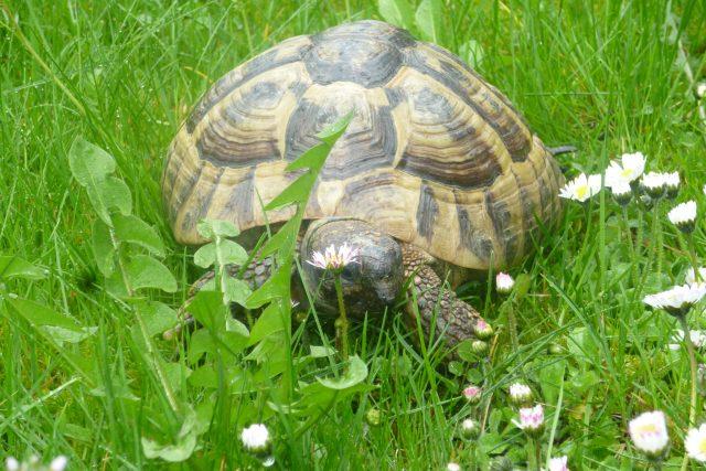 Želvák Šárin