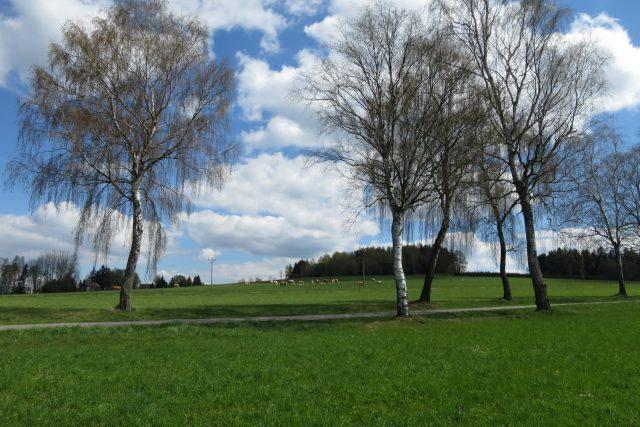 Břízy a jeřabiny vévodí krajině okolo Kameniček