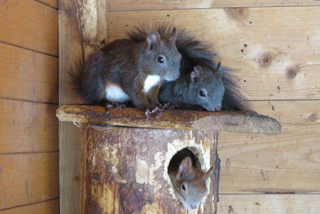 Děti v Pasíčkách rády pozorují veverky, na facebooku ekocentra je můžete sledovat v přímém přenosu