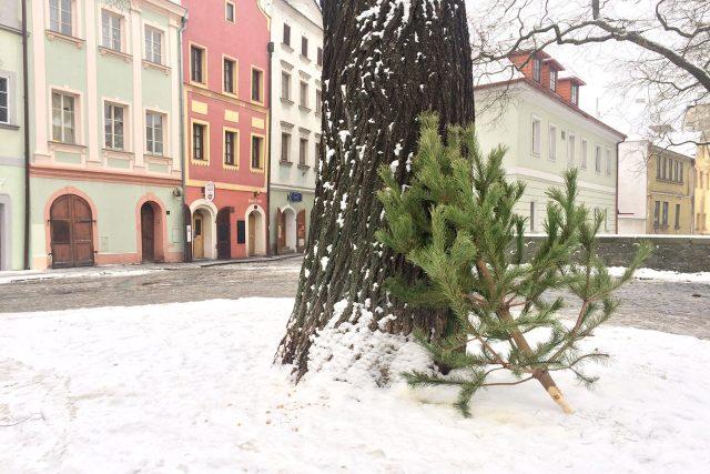 Vyhozený vánoční stromek