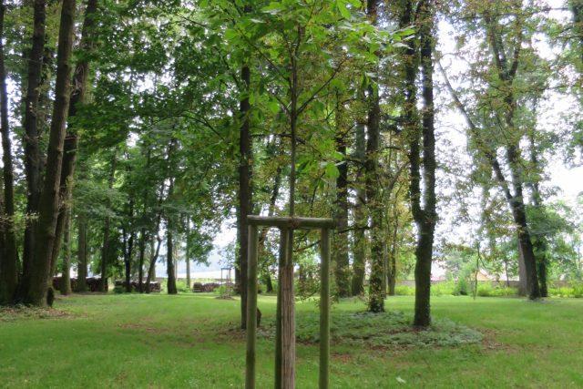 Mezi starými stromy jsou i nové výsadby