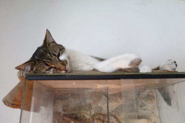 Kočky žijí v symbióze s hady i papoušky