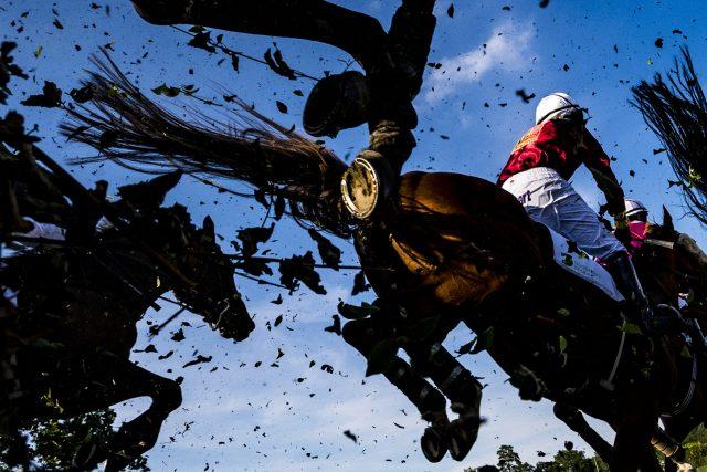 Koně s žokeji překonávají při dostihovém mítinku v Pardubicích  (červen 2019). Snímek je součástí sbírky fotografií,  se kterými Roman Vondrouš zvítězil v kategorii Fotografický soubor na kongresu Mezinárodní asociace sportovních novinářů v Budapešti | foto: Roman Vondrouš,  ČTK