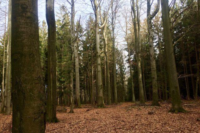 Tereziánský háj a dvacet stromů vysazených do kruhu