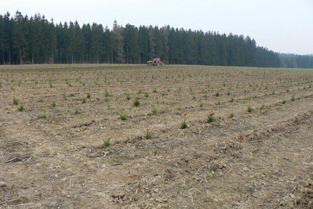 Ve Vendolí během pár let zalesnili 50 hektarů nevyužívaných pozemků