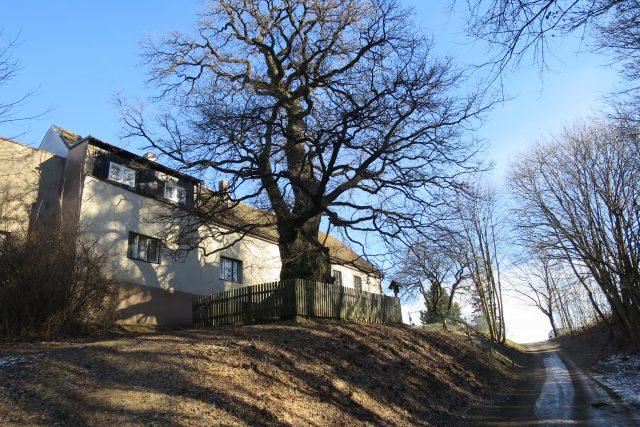 Žižkův dub u hradu Lichnice a Chrudimsku | foto: Tereza Brázdová,  Český rozhlas