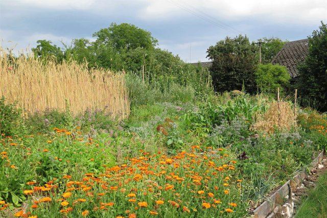 Semenářská zahrada Adély Hrubé