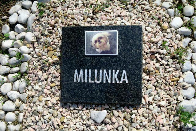 Jeden z náhrobků na animálním hřbitově v Pardubicích | foto: Tereza Brázdová,  Český rozhlas